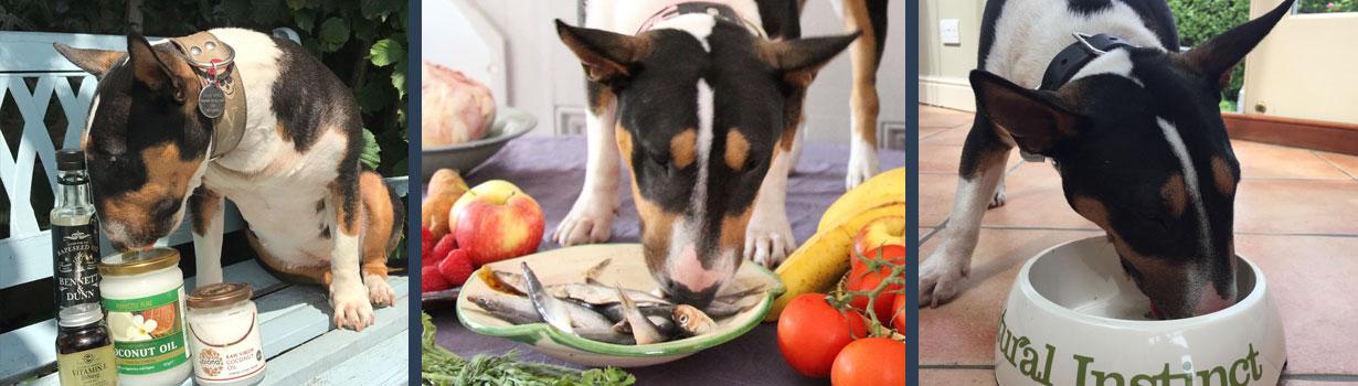 Feeding Behaviour