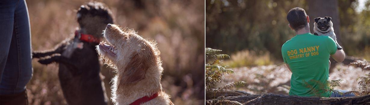 Top Ten Tips: Finding a Dog Walker