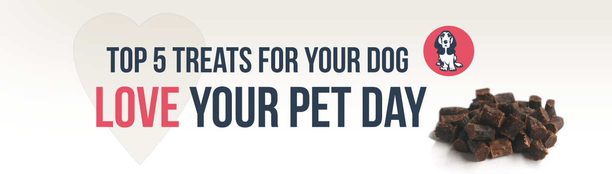 Love Your Pet Day: Top 5 Treats to Show your Dog You Love Them
