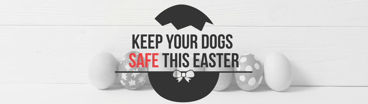 Keep your dog safe this Easter