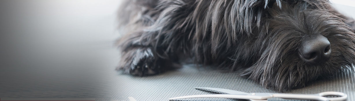 Top Tips to Help Prepare your Puppy for Trips to the Groomers