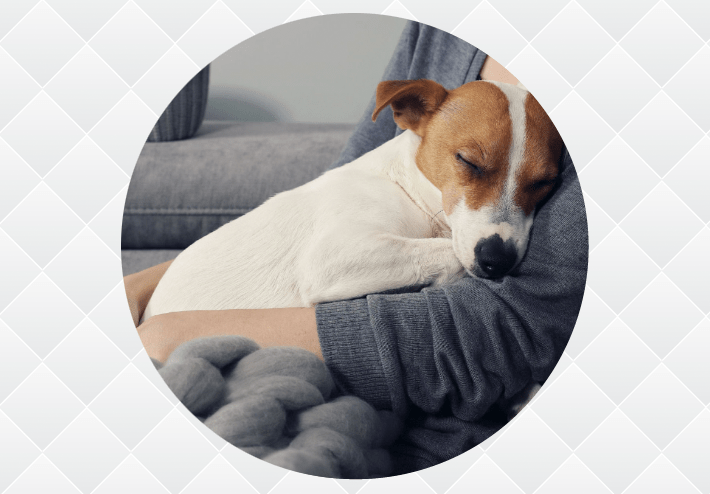 Mindful Living and Our Dogs® 6 Week Course