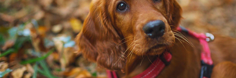 Why won't my puppy walk?