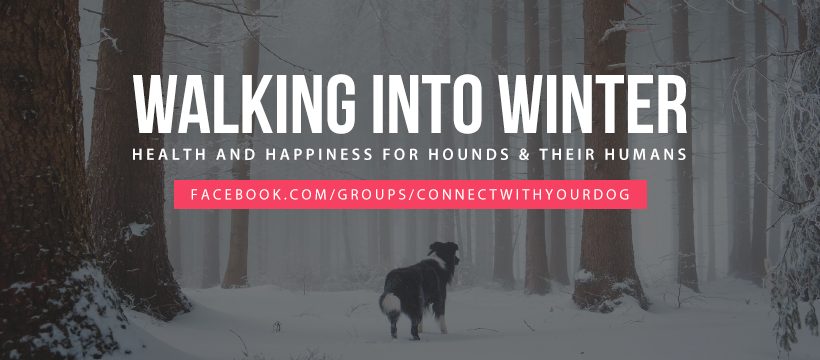 Walking into Winter – for Healthy, Happy Humans and Hounds
