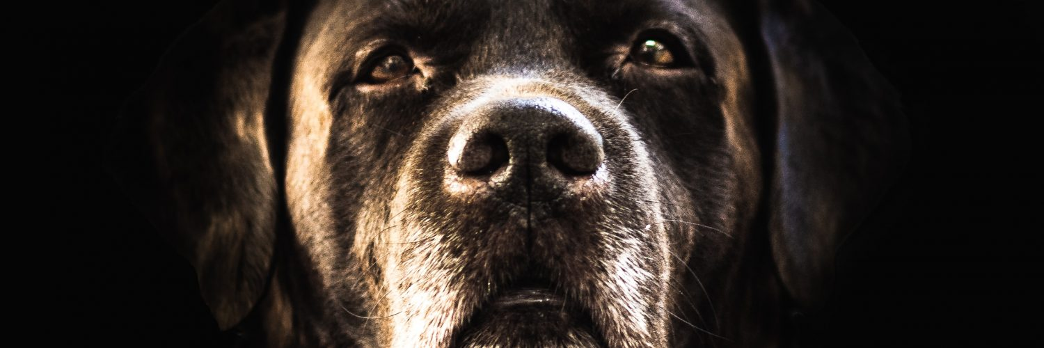 Why does my dog dislike black dogs?