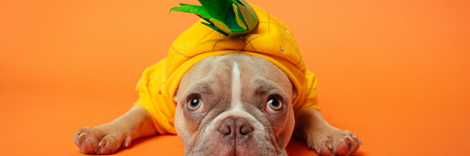 National Dress Up Your Pet Day… will you be getting involved?