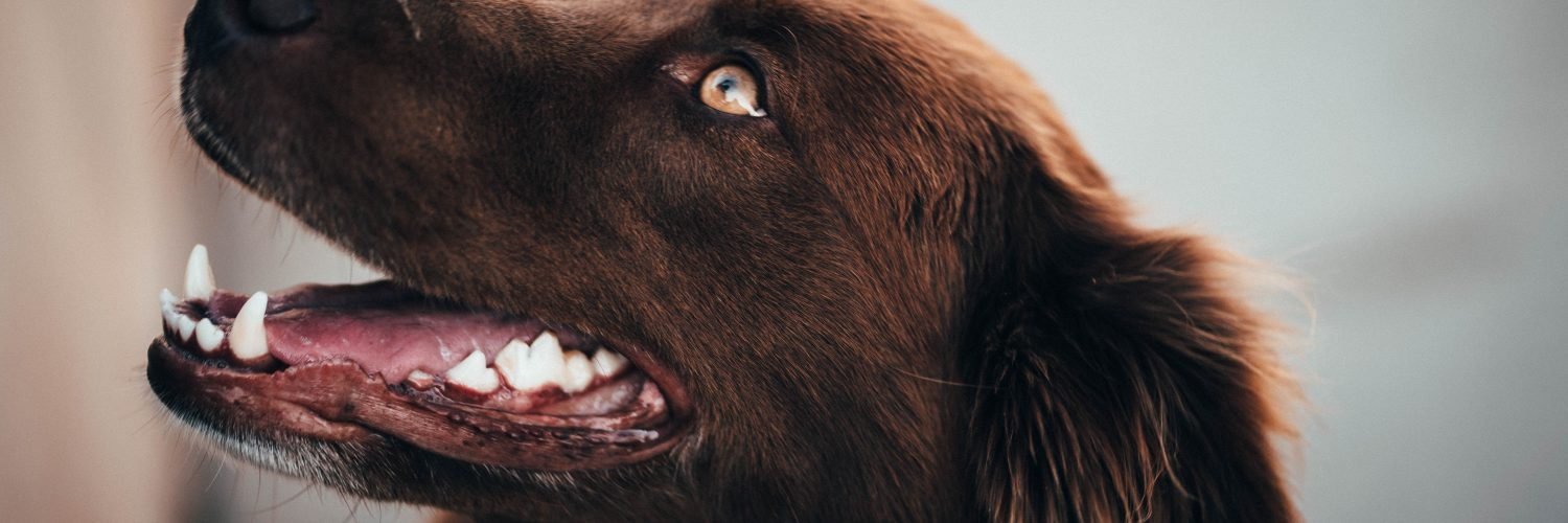 Top Tips for Keeping Your Dog's Teeth Clean