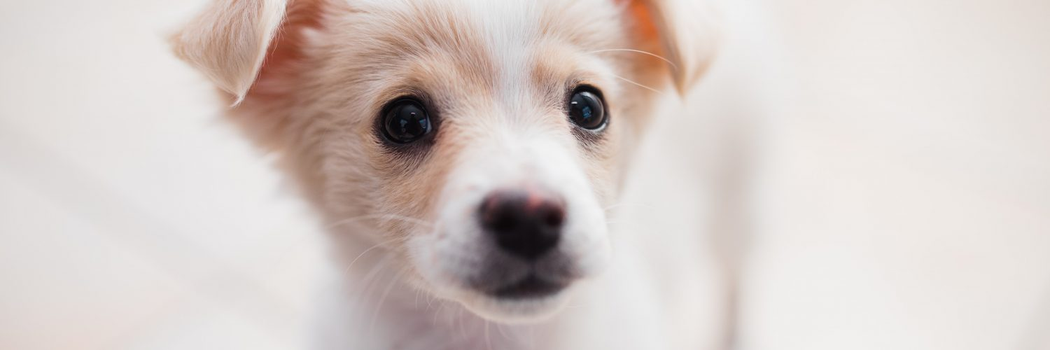 Simple Scent Games for Puppies