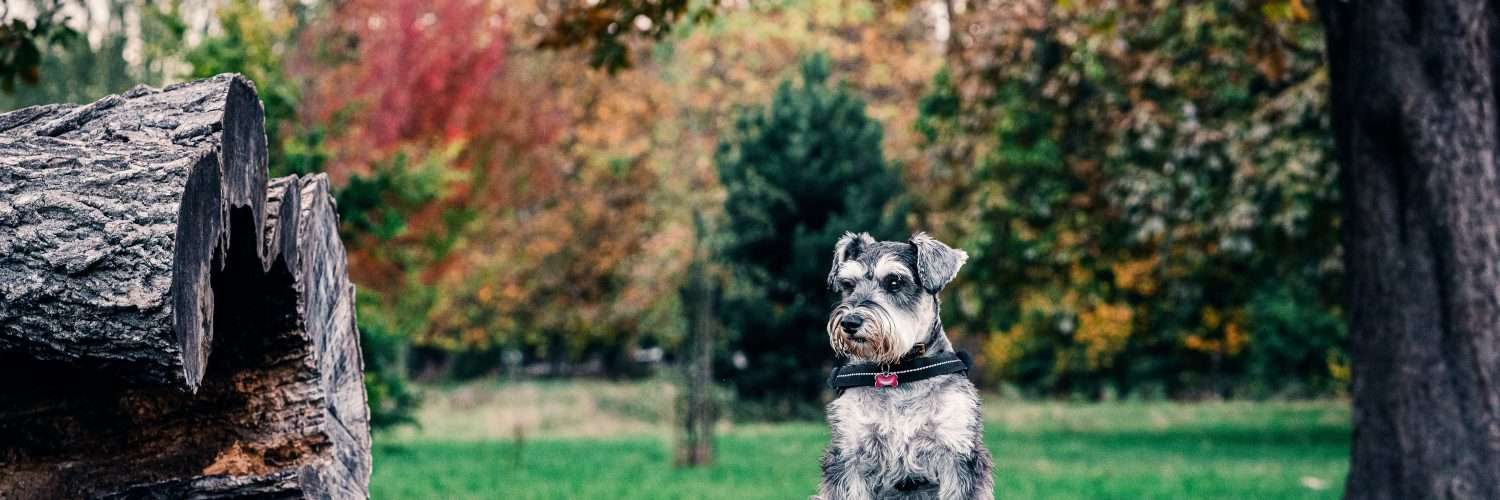 The 3Ds of Dog Training: Duration, Distance, and Distraction